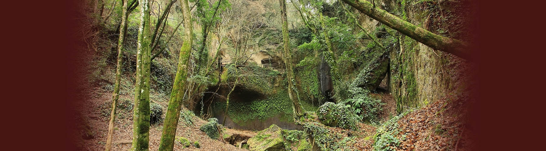 Romitorio di Poggio Conte – immersione nella foresta.