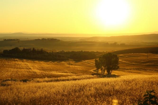 campi di grano della tuscia