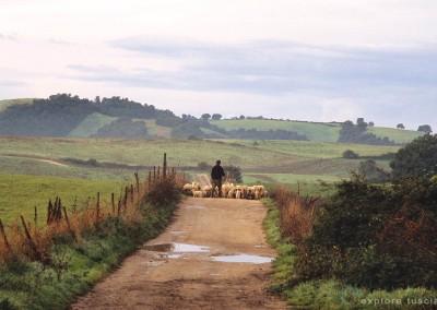 pastori-della-tuscia