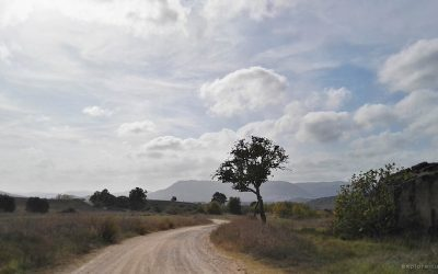 Road to Tolfa