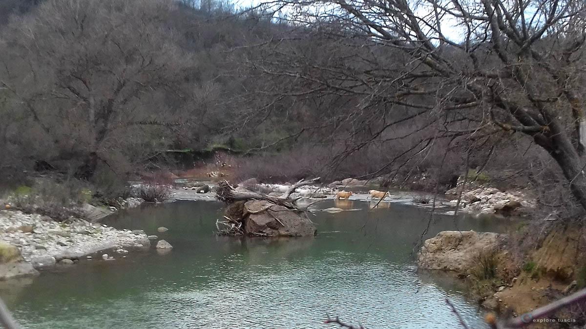 valle-del-mignone-vacche-12
