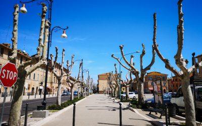 6. Capitozzatura Monte Romano – Il VERDE Urbano
