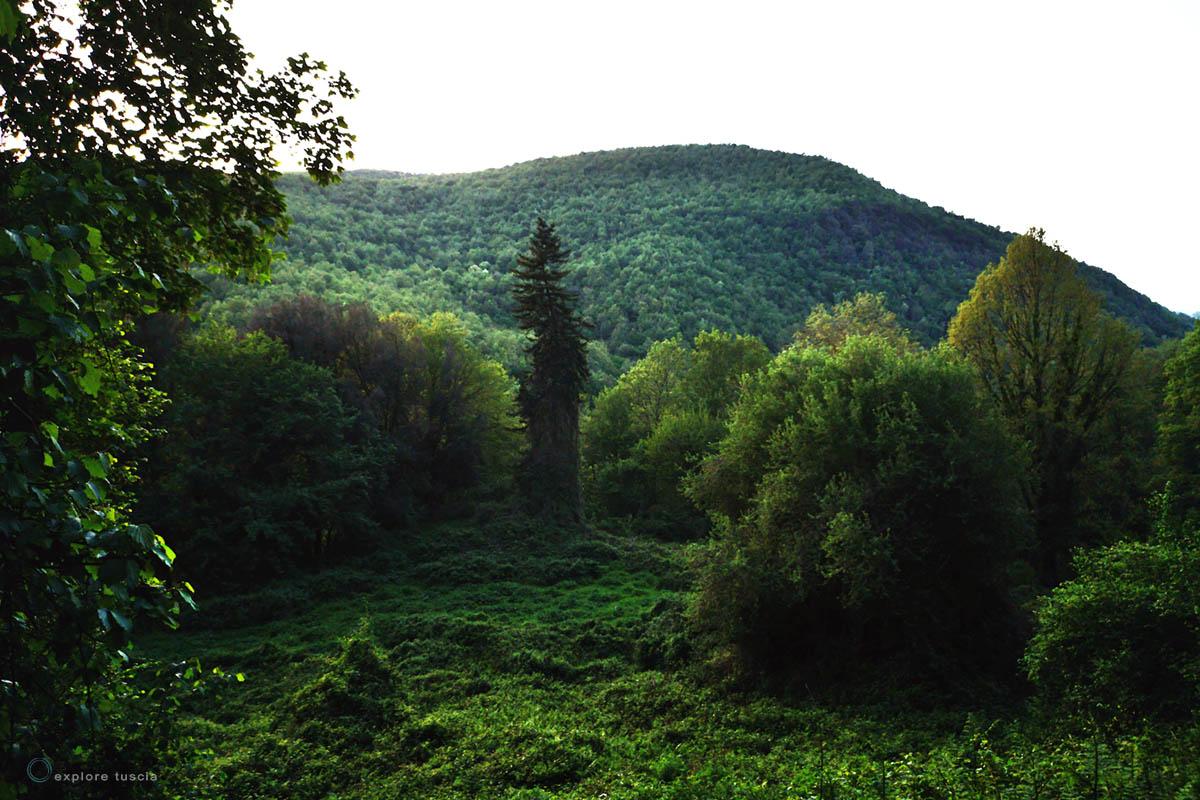 alberi-valle-mignone