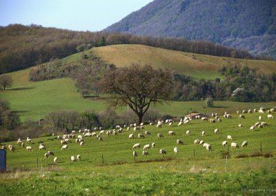 pastori-civitella-cesi