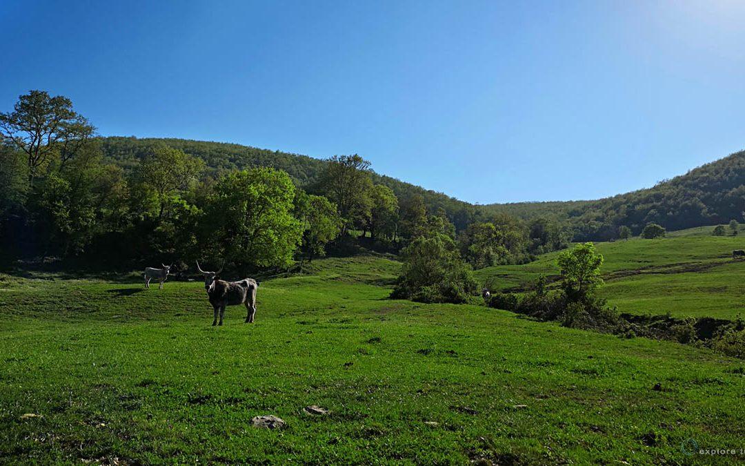 Monti dellaTolfa- Paese di Cuccagna