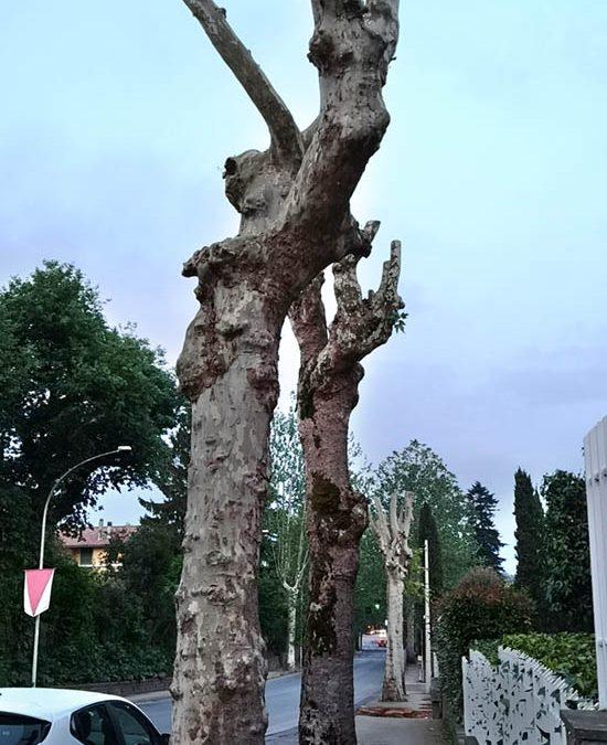 """7. Cassia – """"via delle buche"""" – taglio drastico."""