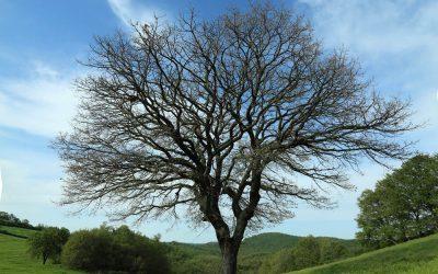 7. Albero solitario – ricchezza