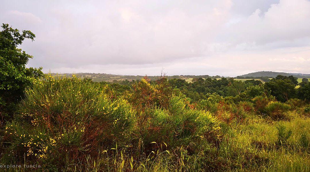 Paesaggi del Tufo 2