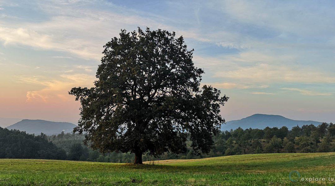 L'albero del Vulcano