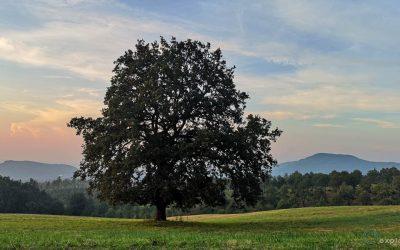 16 – L'albero del Vulcano