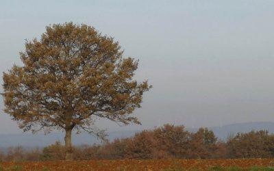 20 – Albero Camporile per 2100?