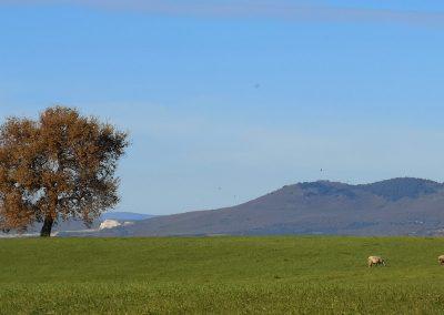 Monte Canino albero camporile
