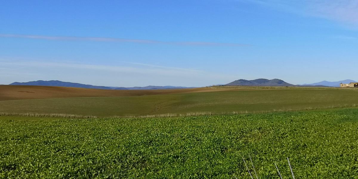 Formicone Monte Canino e Toscana