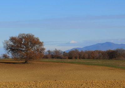 Monte Cimino dal Formicone e albero camporile