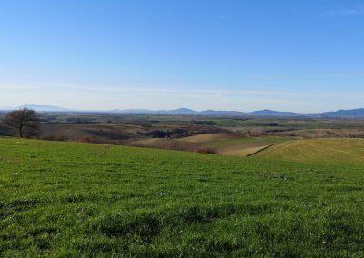 Formicone Tuscania verso Toscana