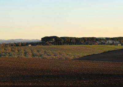 Pian di Vico - Tuscania