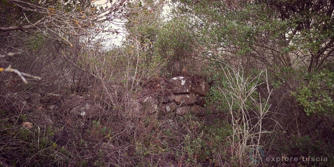 Muro nella Foresta