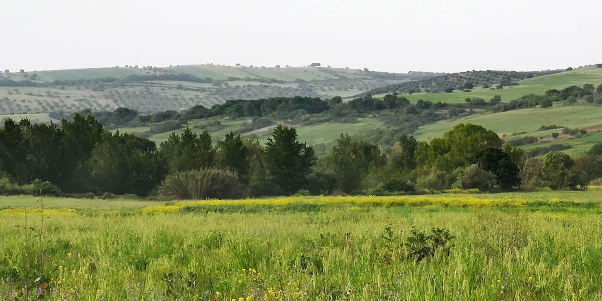valle-del-mignone-ss675
