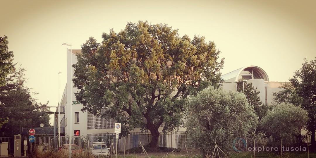 albero-camporile-tribunale