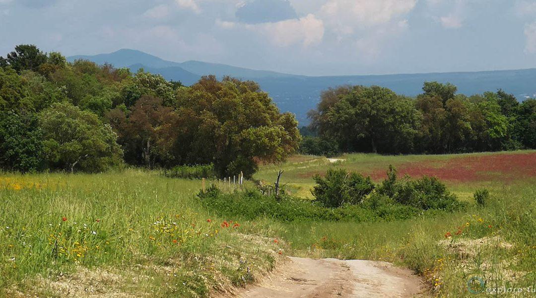 Tuscania – Terra di Sughere 8