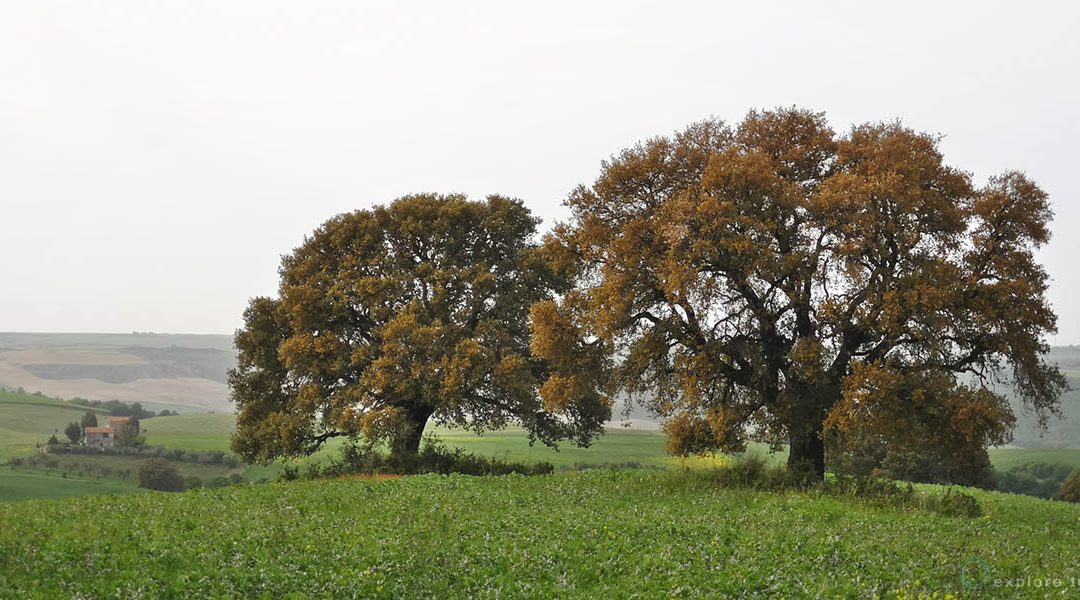 Valle del Mignone – Alberi