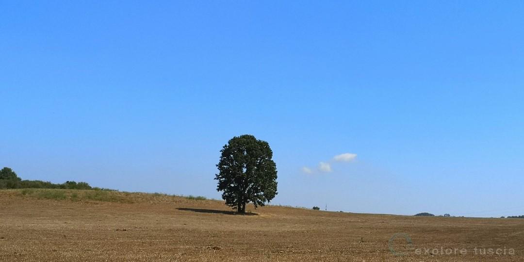 Albero-camporile-bassano_224151