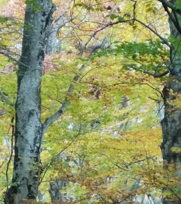 Nella Foresta – colori