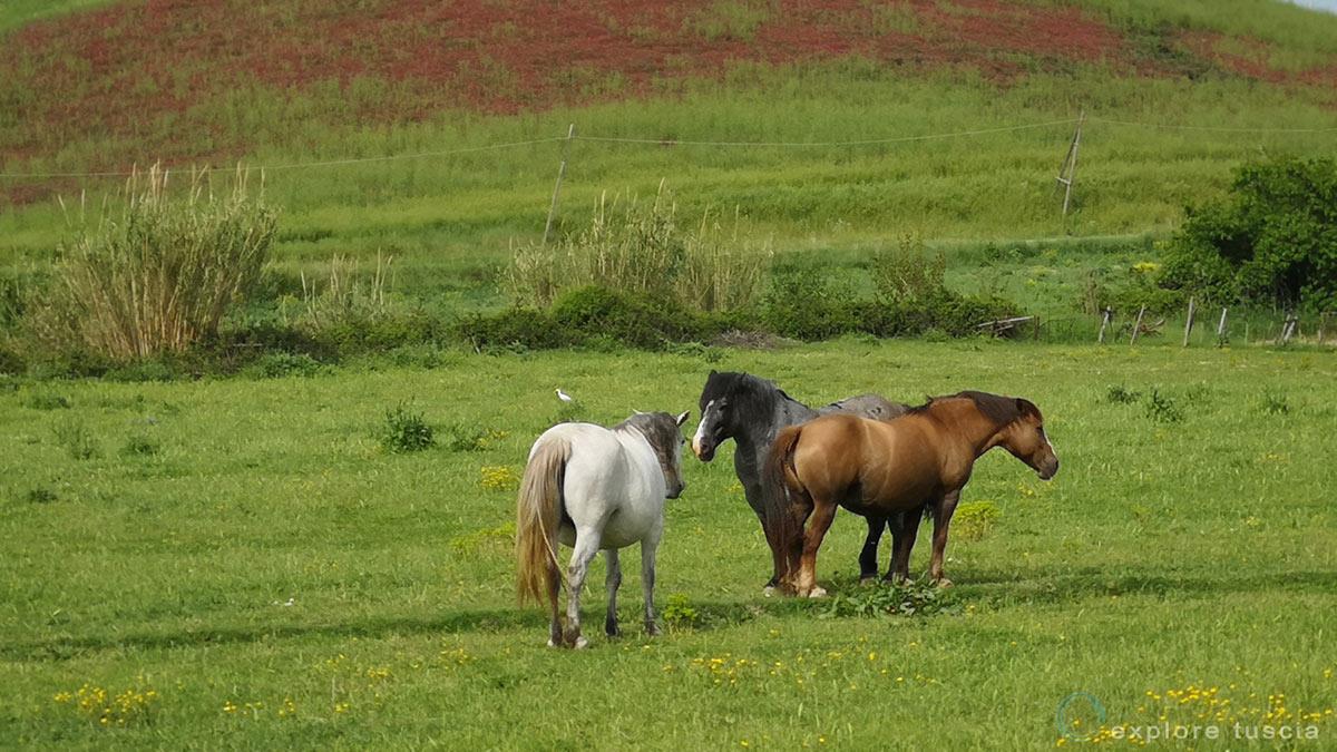 cavalli-mignone-122