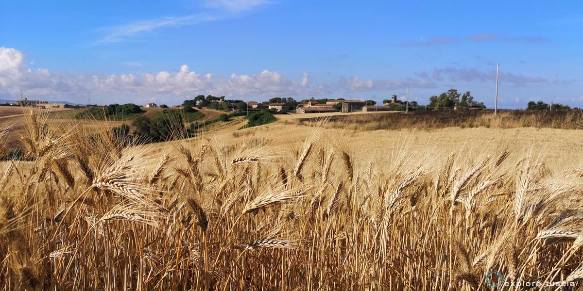 grano-montebello-tuscia-2-112