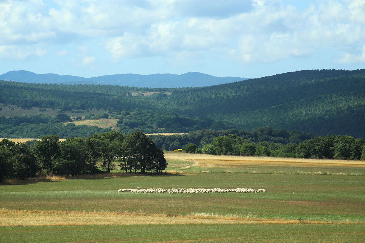 parco-nazionale-etruria-pastorizia-12-122
