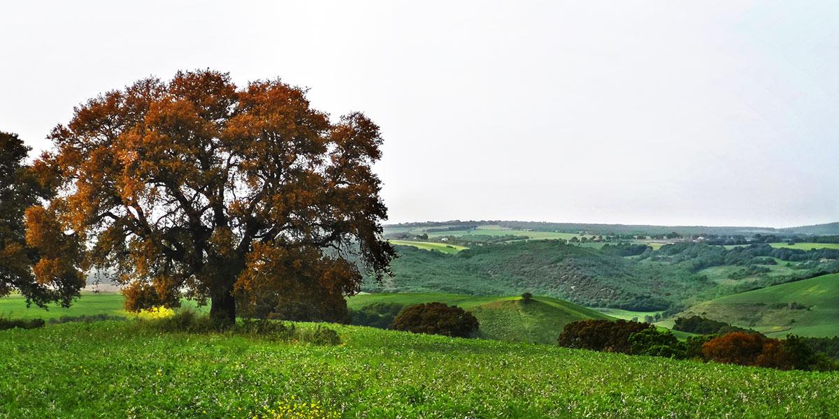 valle-del-mignone-scempio-122