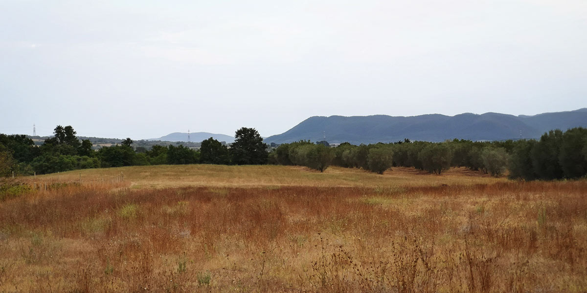 tolfa-rurale-campagna-122