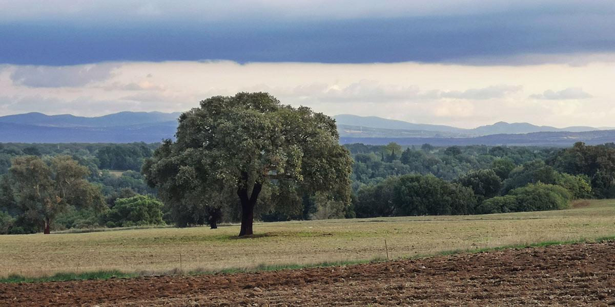 tolfa-tree-distance-112