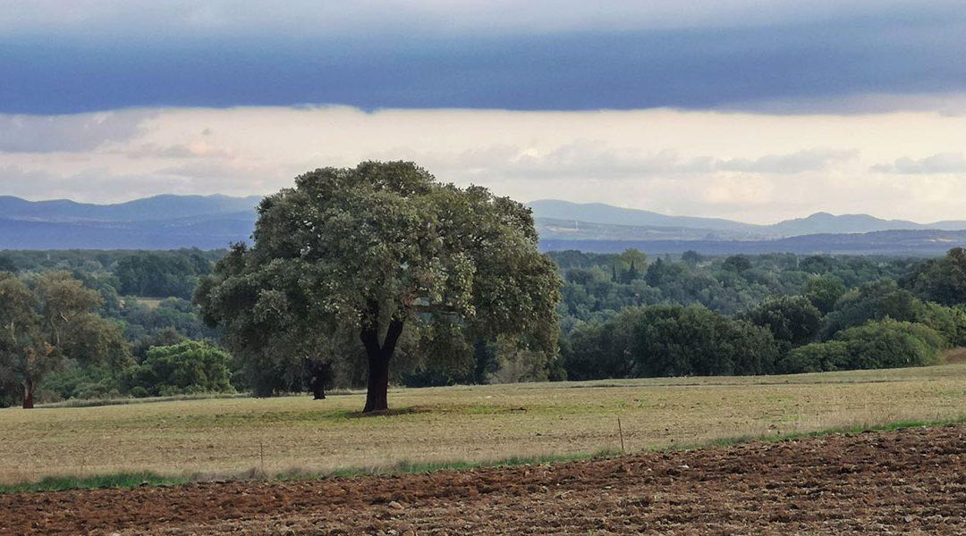 Terra per Land Grabbing?