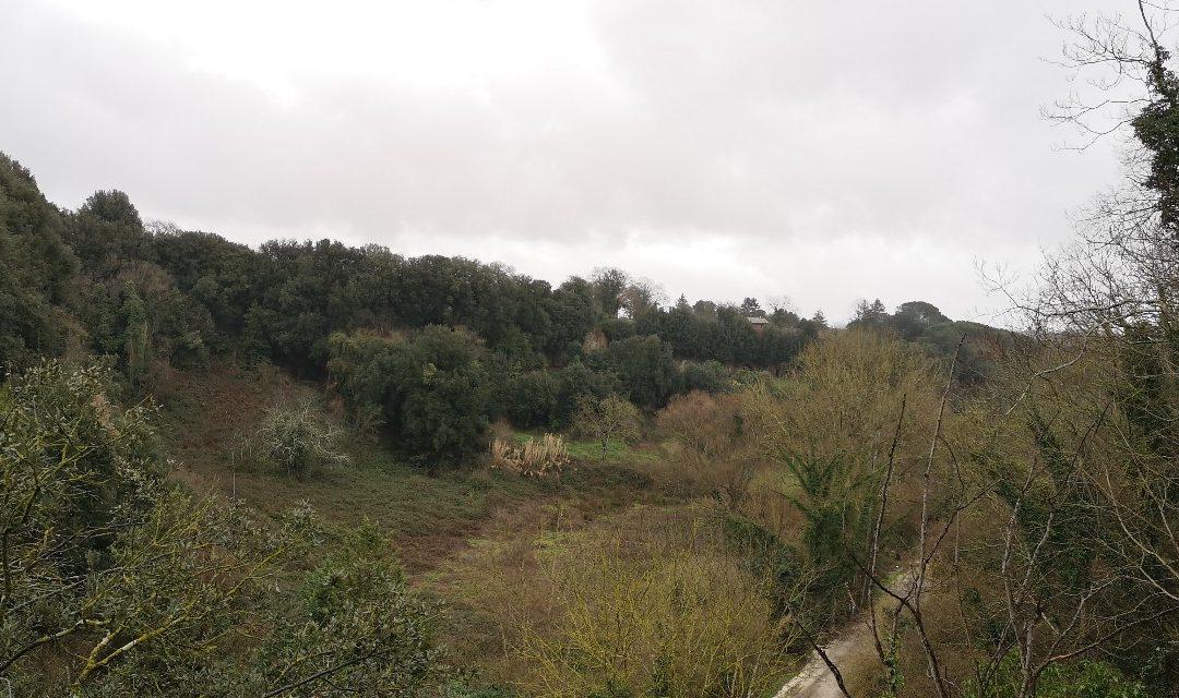 La Selva di Sutri