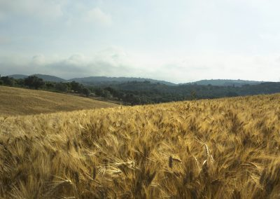 Tuscania-pian-di-vico-grano