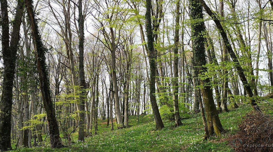 La Deforestazione e i Gas Serra.