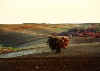 Tuscania-San-Giuliano-pian-di-vico1079