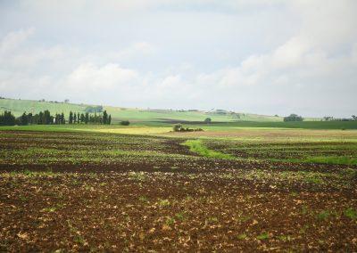 Tuscania-casalone-1060