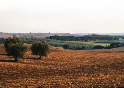 Tuscania-pian-di-vico-da-v-clodia-122