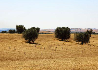 Tuscania-pian-di-vico-da-v-clodia-2-112
