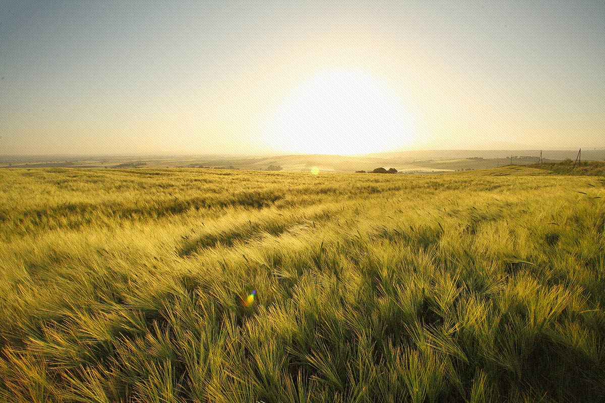 La Tuscia, terra di grano